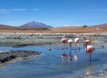 Zobacz pustynię solną, flamingi oraz alpaki w północnym Chile i Boliwii – Loty z Berlina, transfery i wyprawa 4×4 za 2924 PLN!