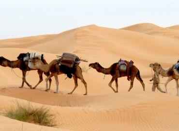 Wakacyjny urlop w Tunezji – 4* hotel przy plaży z all inclusive oraz aquaparkiem ze zjeżdżalniami za 1476 PLN!