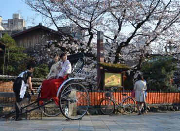 Hanami czyli oglądanie kwitnących wiśni w Japonii – Loty z Pragi do Tokio za 1819 PLN