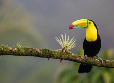Wyprawa do tropikalnej dżungli Ameryki Centralnej i na wybrzeże Pacyfiku – Loty z Berlina do Nikaragui i Kostaryki za 2003 PLN!