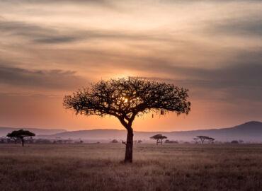 Hakuna Matata! Afrykańskie safari i rajski Zanzibar – Loty z polskich miast do Tanzanii i loty krajowe od 2714 PLN!